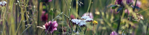 meadow flowers - cropped